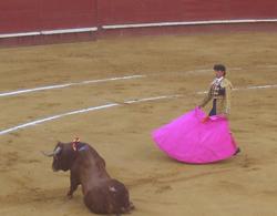 corrida_plaza_toros_arena_valencia