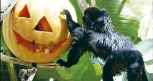 mono-terra-natura-halloween