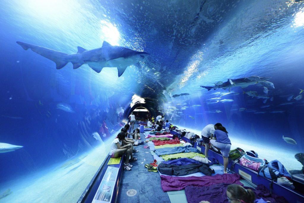 Cosa fare a Valencia ad Agosto: le attività proposte dall'Oceanogràfic; Dormire con gli squali